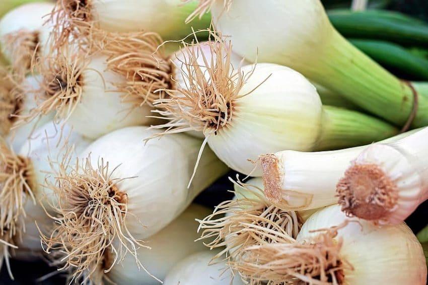 Sfaturi utile pentru recolte timpurii de ceapă
