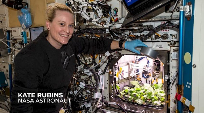 Prima recoltă de ridichi crescute în Spațiu! Imagini inedite de la NASA