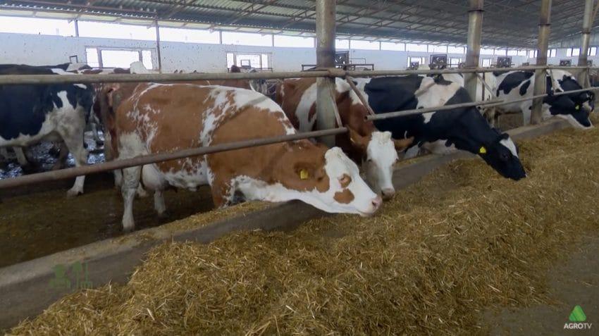 Modernizarea grajdurilor – o investiție necesară pentru o fermă de vaci performantă