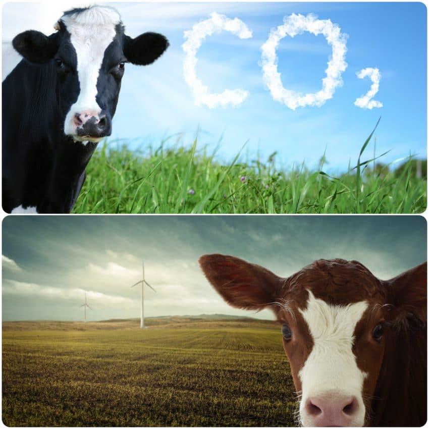 Decidenții europeni vor să-i plătească pe fermieri pentru a reduce emisiile de gaze cu efect de seră provenite de la animale