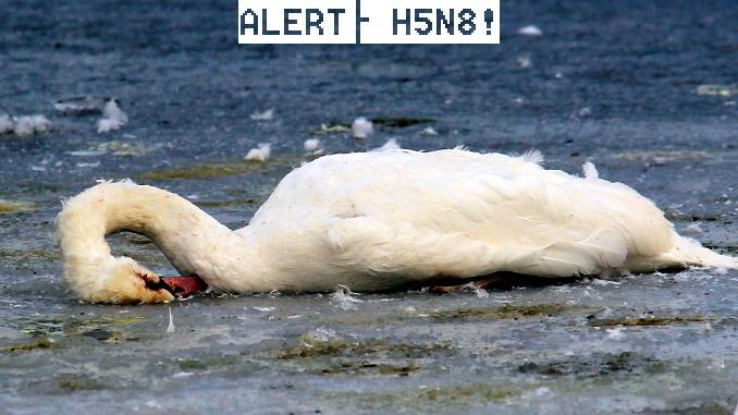 Un nou focar de gripă aviară, confirmat. Autoritățile, în alertă!