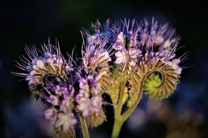Comisia Europeană se consultă cu privire la obiectivele UE de a restabili biodiversitatea Europei