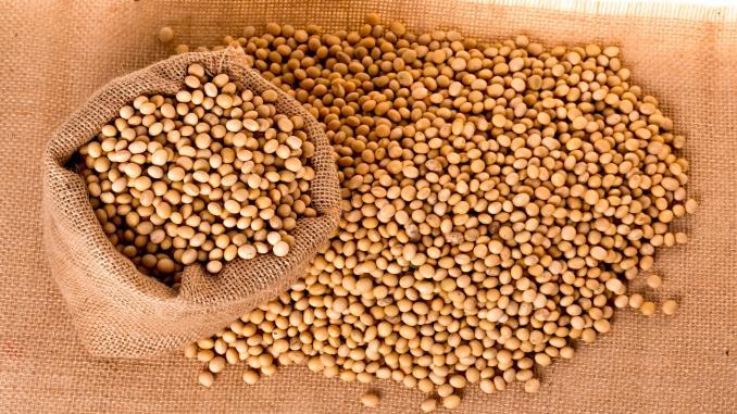 500.000 de tone de șrot de soia consumate în România pentru hrana păsărilor și animalelor. Producția autohtonă lasă de dorit