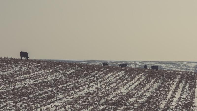 Prognoza Agrometeorologică 06-12 ianuarie. Ce lucrări se efectuează în culturile agricole