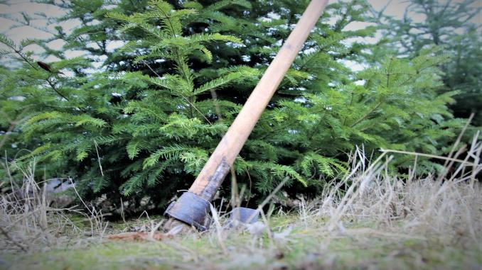 Furtul din pădure va fi mult diminuat. Promisiunea unui ministru se bazează pe funcționalitatea SUMAL 2.0