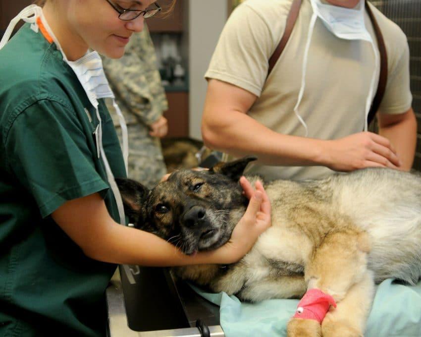 Avertizare privind utilizarea produselor medicinale veterinare care conțin substanţa activă IVERMECTINĂ în prevenţia şi tratamentul COVID-19