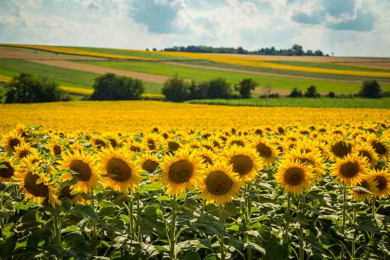 Index de Secetă, primul produs de asigurare pentru secetă din România aduce noi beneficii fermierilor în anul agricol 2021