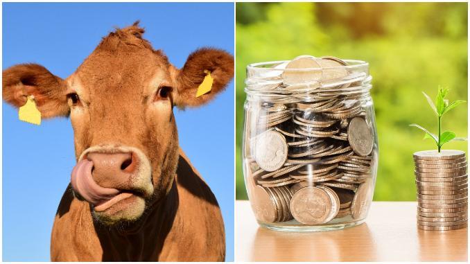 """ULTIMA ORĂ. Care sunt subvențiile pentru crescătorii de animale care vor fi tăiate. """"Nu știu dacă vor exista bani!"""" (exclusiv)"""