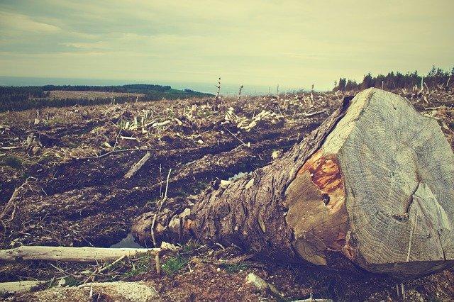 Controalele din fondul forestier au dus la amenzi de aproape 24.000.000 RON