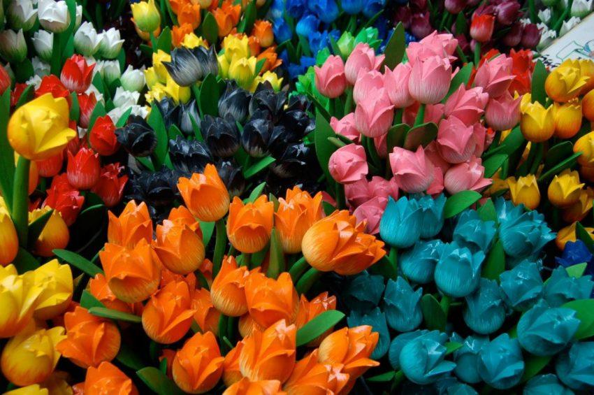 Cum se îngrijesc bulbii de lalele – plantare și înmulțire