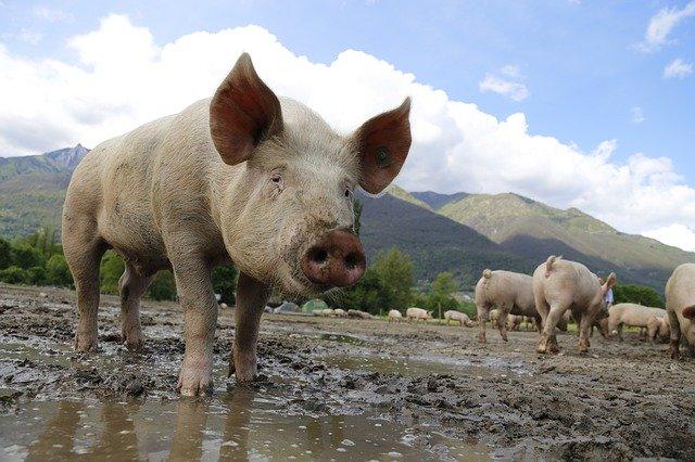 Informare APIA pentru crescătorii de animale. Depuneți ACUM cererile de plată