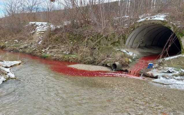 VIDEO Poluare EXTREMĂ cu sânge! Justificările nu scuză ignorarea normelor.