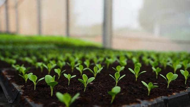 Cum se face testarea semințelor pentru o germinare și o recoltă calitativă