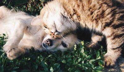 Animale în pericol, salvate de polițiști